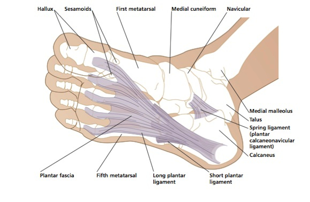 under foot diagram parts of the foot diagram whole foot